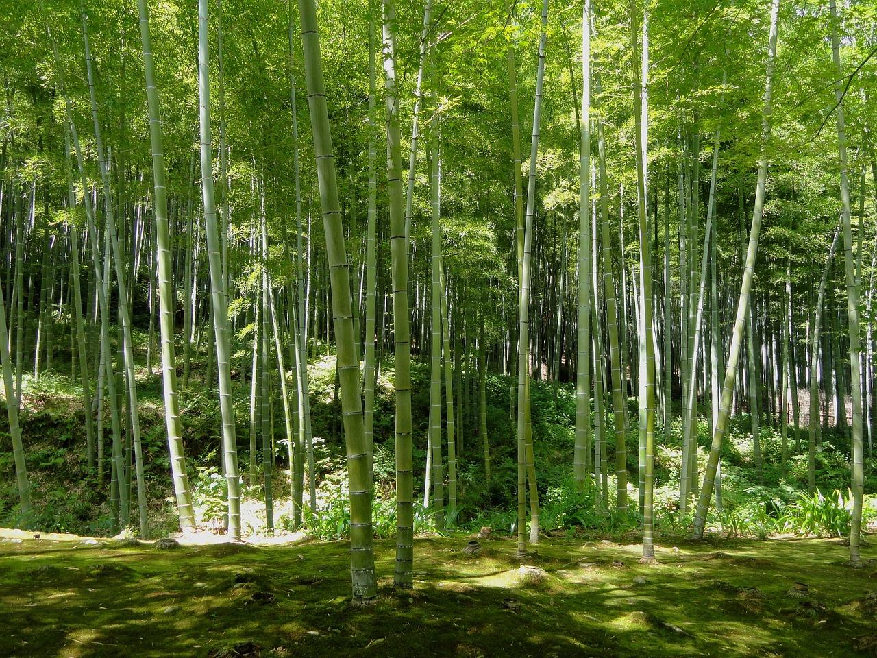 日本農芸化学会2017京都に出展します!